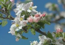 Фотообои 8-735 Primavera